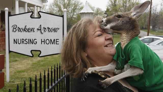 Американка усыновила кенгуру