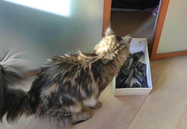 Кот озабочен