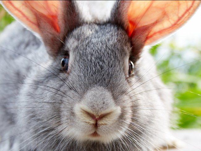 Зайцы Скачать - фото 10