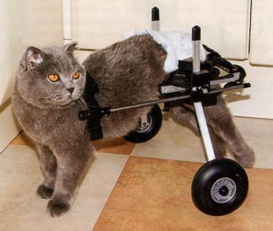 Фото котов инвалидов