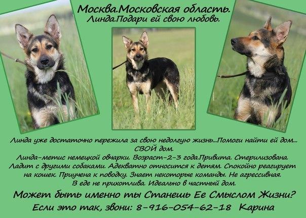 http://goodnewsanimal.ru/Rrr/77/889/343535/RLSRUaeT1TA.jpg
