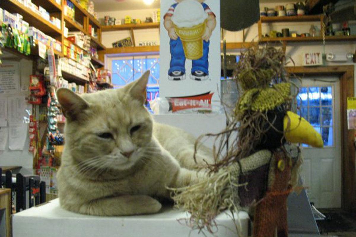 http://goodnewsanimal.ru/Rrr/77/889/343535/cat-stubbs-mayor-1200.jpg