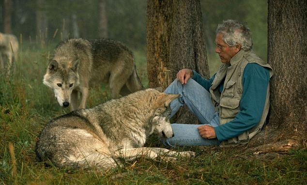 http://goodnewsanimal.ru/Rrr/dev/gepard/55/ajdakho-10.jpg