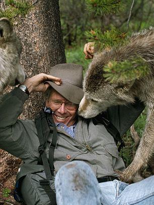 http://goodnewsanimal.ru/Stiles/99/1/3332/volki-2.jpg