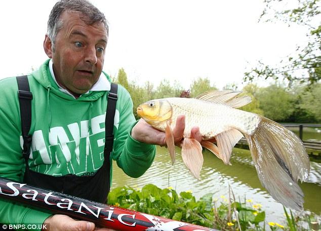 какую рыбу ловить на старике