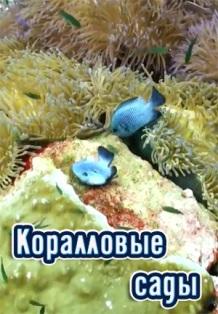 Чудо природы: Коралловые сады (2014) Russia Today Documentary
