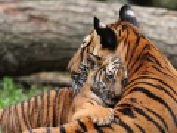 Животные с детенышами в День Матери (19 фото)