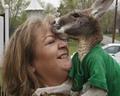 Американка усыновила кенгуру (5 фото)