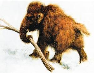 Исследования русских мамонтят