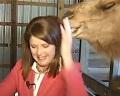 Скунс пометил посетителей парка, а верблюд закусил волосами