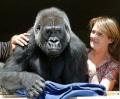 Во Франции директор зоопарка удочерил гориллу