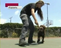 В Израиле трудные подростки дрессируют собак