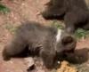 Три медвежонка с мамой