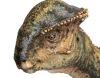 Ученые обнаружили бодающихся динозавров