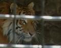 В Ялтинском зоопарке пытаются спасти животных от жары