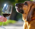 Собака умеет тестировать вино