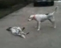 Собака притворяется мертвой