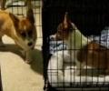 Собака вызволила из клетки свою сестру