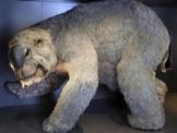 В Австралии нашли скелет самого большого сумчатого