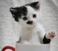 Котенок из приюта похож на Гитлера