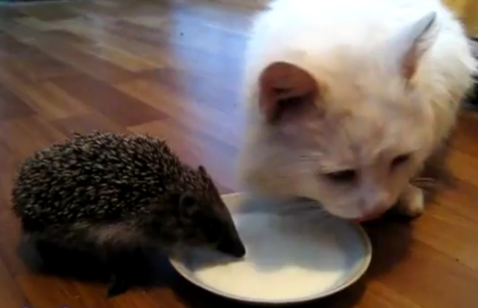 Кот и молоко картинки