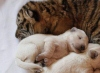Новое видео овчарки Талли с щенками и тигрятами