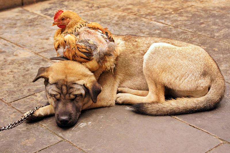 фото с собаками в новосибирске в парке