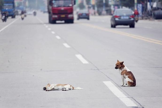 во сне собака попала под машину