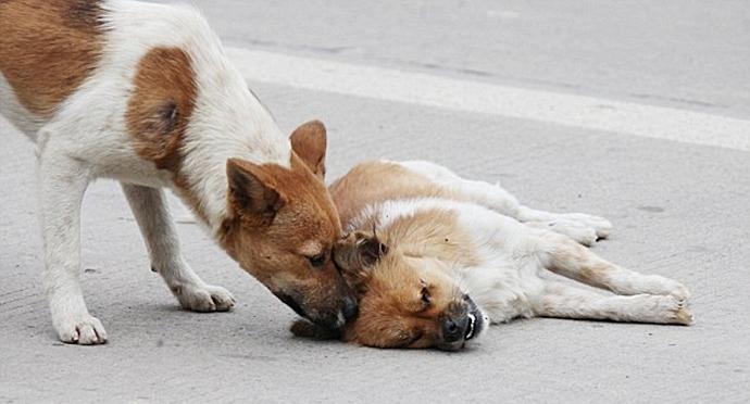читаете: Тень как сбить собаку со следа во время преследования уже давно прочно