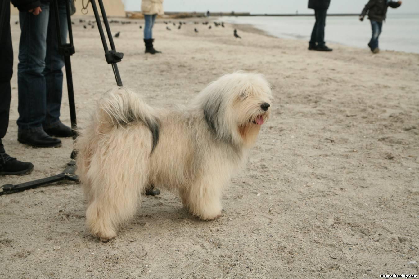 Прививка для собаки от чумки - 49