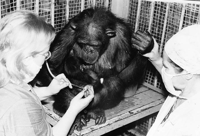 опыты на обезьянами