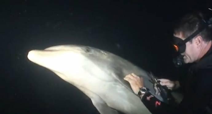 Дельфин попросил дайвера о помощи  S98852820