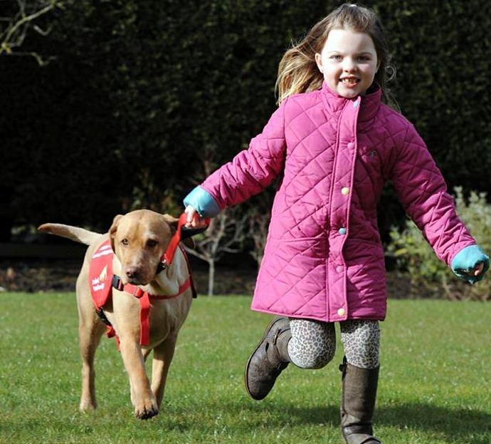 Собака спасает ребенка от сахарного диабета