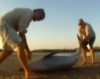 Репортер спас дельфина