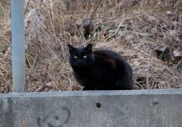 Достопримечательность Атланты - кошка Пайпер