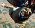 Мопс Отис обожает прыжки с парашютом