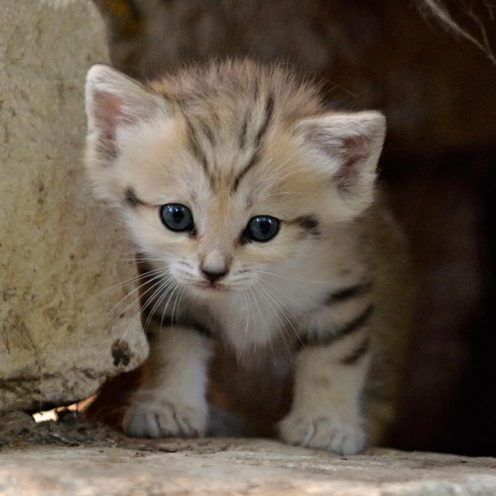 Кот детеныш кота