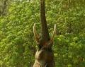 Слон решил, что он жираф