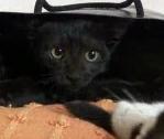 Черный кот в черной сумке