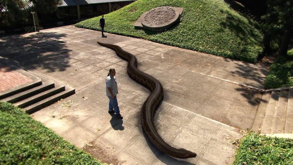 Титанобоа: Самая огромная змея в истории Земли