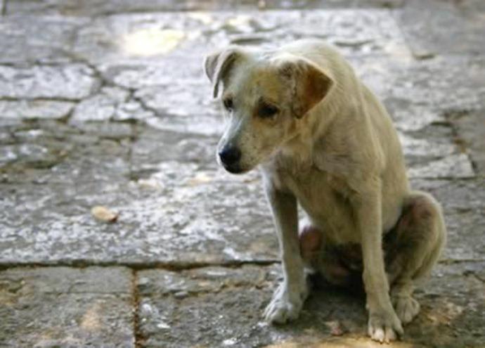 Sitemizde köpek fiyatları yazmamaktadır ücretsiz bir köpek