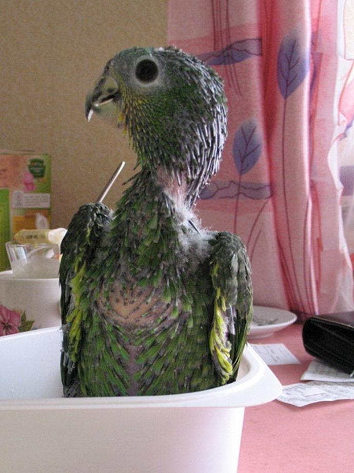Свитер маленький попугай Москва