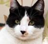 В Великобритании нашли чрезвычайно редкого кота