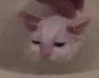 Кошка - любительница тёплых ванн
