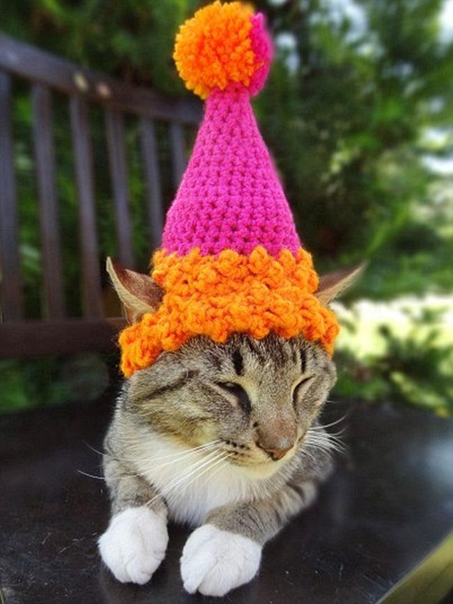 Милые шапочки для любимого кота: alionushka1
