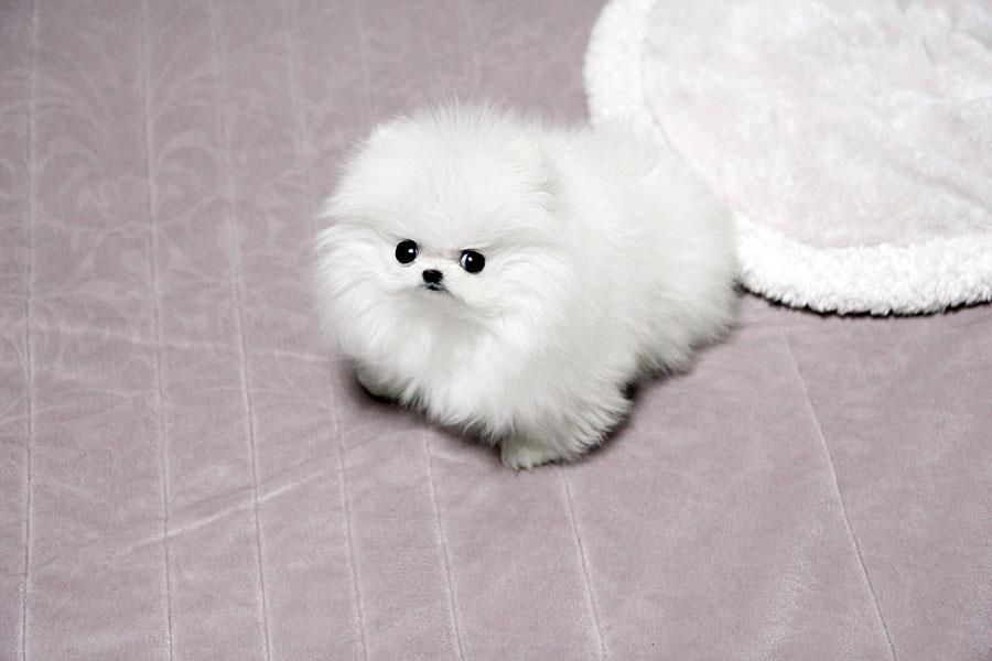 Клуб Маленьких Собак MiniDogs  Информация консультации
