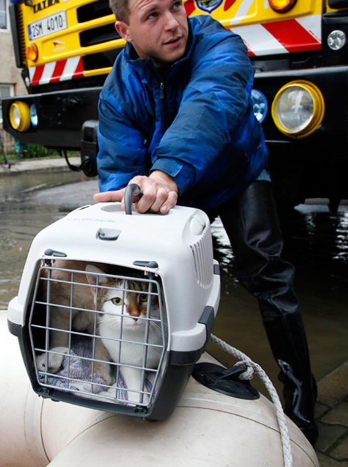 Спасение животных в пострадавшей от