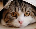 Известному коту Мару исполнилось 6 лет