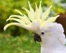 Попугаи какаду оказались неожиданно умными