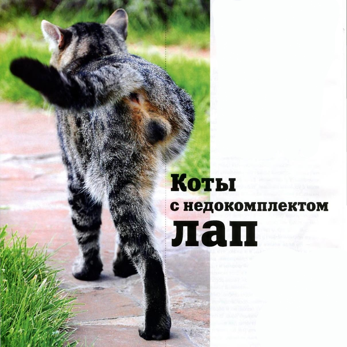 Кот без задней лапы